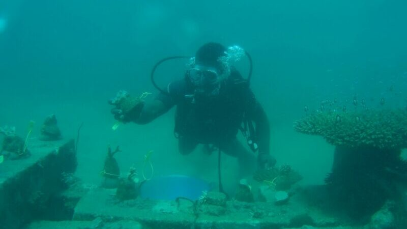 Women and youth are leading Kenya's coral reef revival - Climate Home