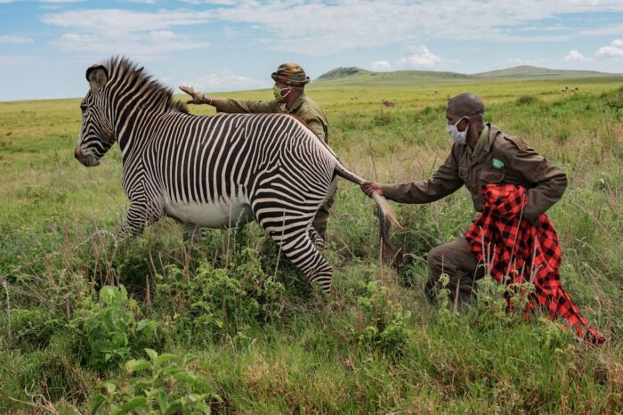How wildlife conservation in northern Kenya survived the pandemic - National Geographic